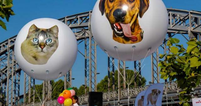 3 ballons gonflables hélium | Portes ouvertes de la SPA Paris