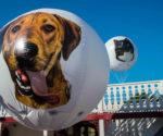 ballon-sphere-publicitaire-helium-SPA-Paris-8.jpg